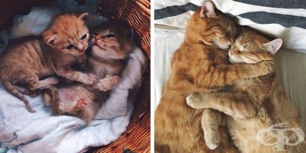 Те не спират да се прегръщат.
