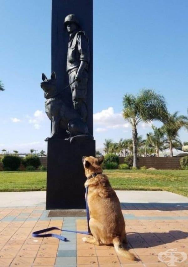"""""""Заведох домашния любимец да посети паметник на куче от войната."""""""