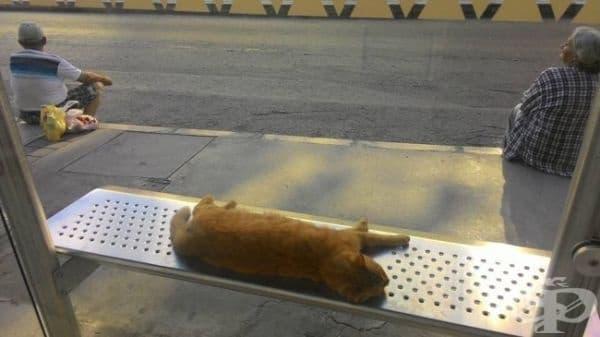 Хората стоят на тротоара, докато котката се излежава на пейката.