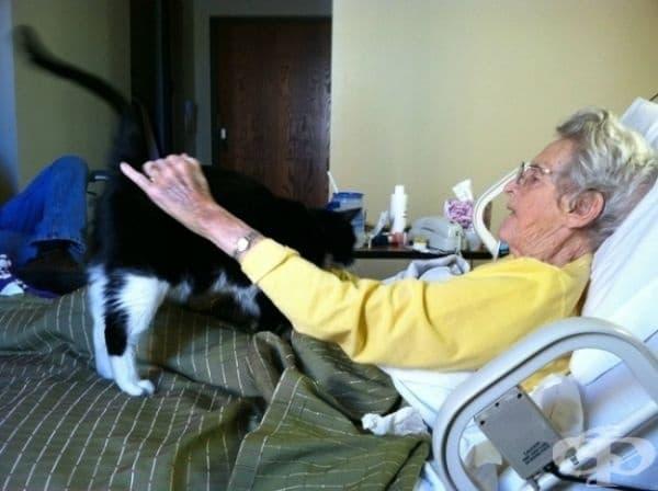 Тази котка се промъква в болницата, за да посети своя болен приятел.