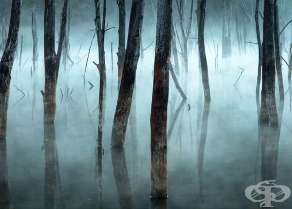Сутрешна мъгла над езеро Куейдел, Румъния.