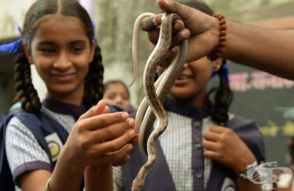 Празник Наг Панчами. Всяка година през юли или август (в зависимост от позицията на луната) в Индия и Непал се чества празникът на змиите (свещените змии). Влечугите получават мляко, а младите омъжени жени посещават родителите си.