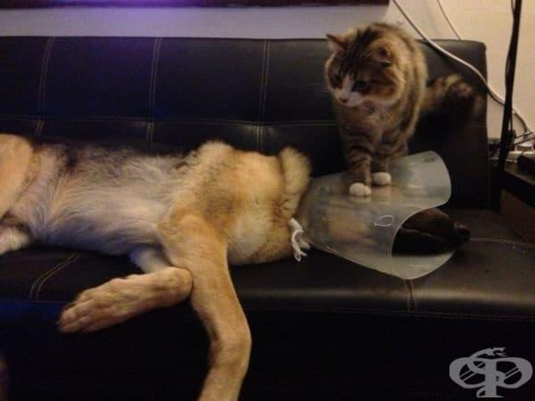 Яката за възстановяване изглежда добра идея при ветеринаря... но не и у дома.