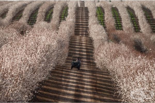 Трактор между бадемовите поля, Калифорния.