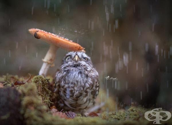 Приятели под дъжда.