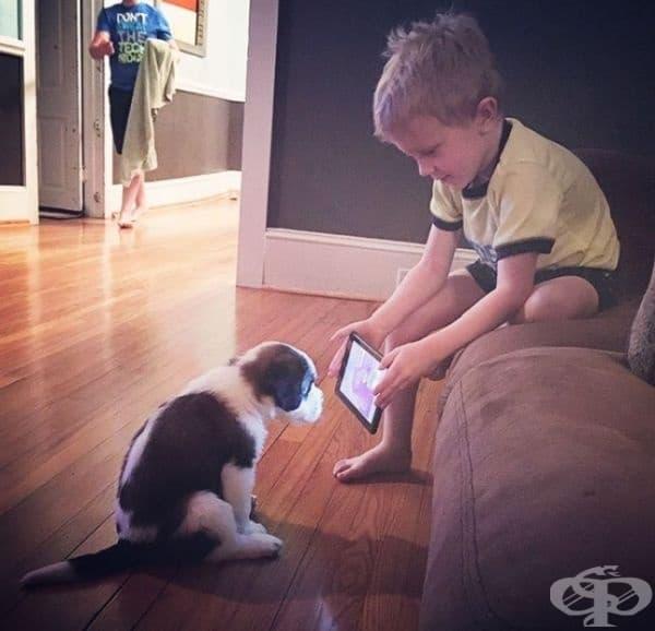 Наскоро Линкълн получи кученце за подарък. Неговите родители го помолиха да потърси клипове в интернет, за да обучи кученцето. Ето какво направи той: