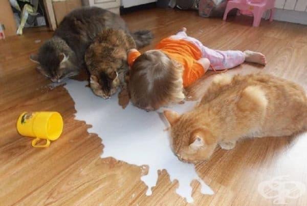 """""""Ден 12. Те все още не знаят, че не съм котка."""""""