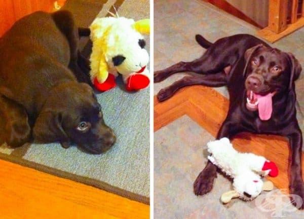 15 домашни животни и техните любими играчки
