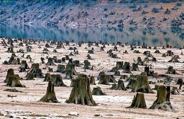 На мястото на гъста гора в националния парк Уилямс в Орегон са останали само пънове.