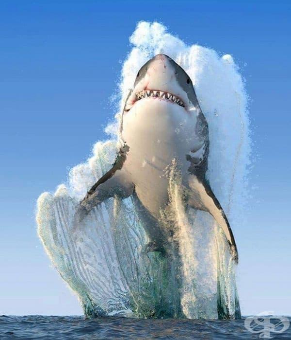 Уникален кадър на голяма бяла акула.