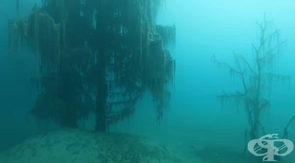 През зимата повърхността на водата замръзва и езерото се превръща в идеално място за риболов на пъстърва.