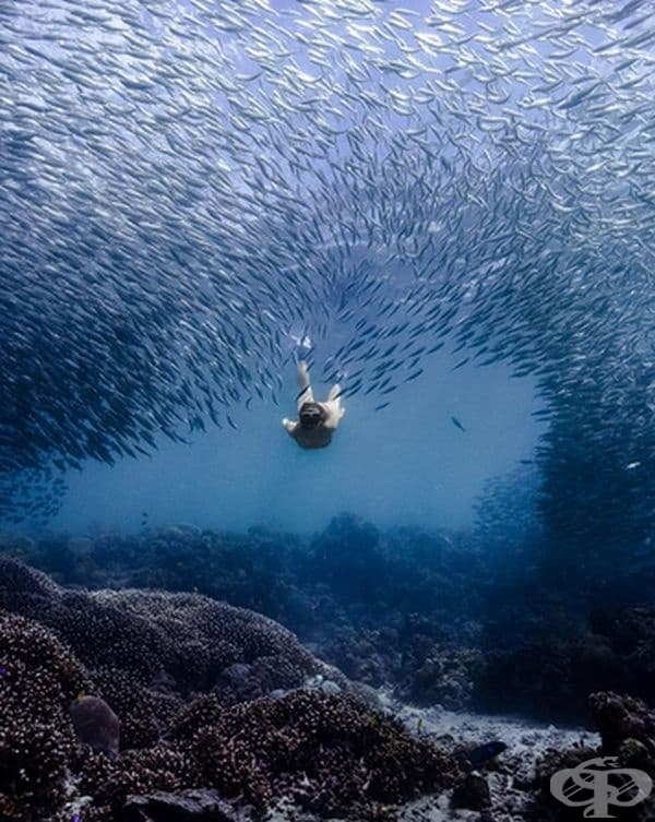 Ако търсите ново изживяване сред морските обитатели, то може да плувате с повече от милион сардини във  водите край Моалбуал.