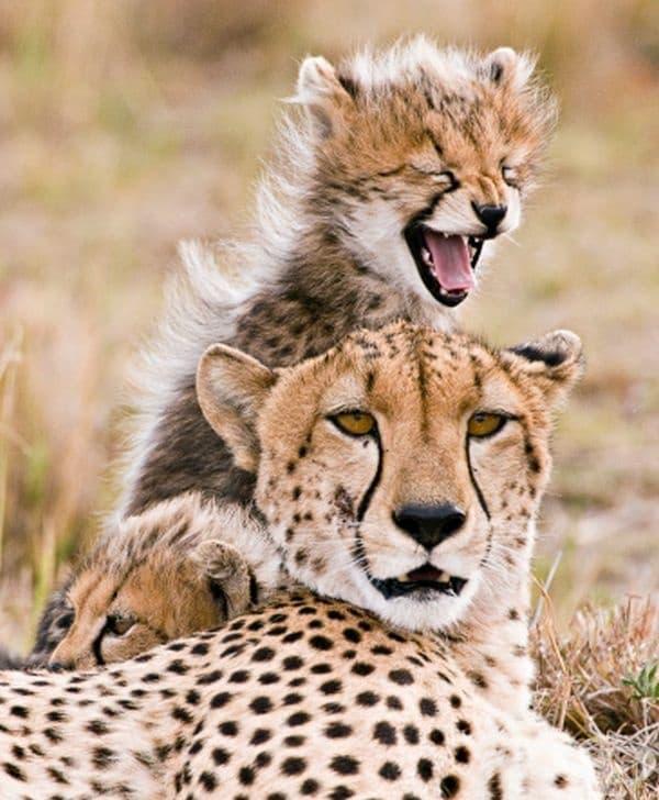 Смехът на децата е подарък за всеки родител.