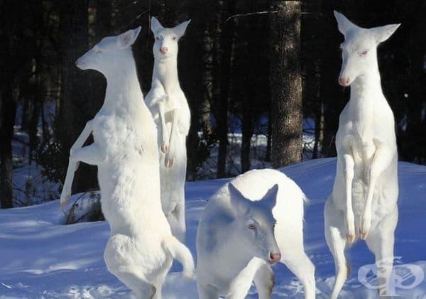 Възхитителни елени.