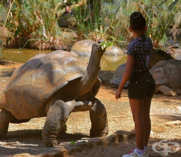 Алдабра гигантска костенурка. Гигантските костенурки са известни с невероятното си дълголетие, но Алдабра е наистина уникално животно, което достига възраст от 255 години. Много учени смятат, че това е най-старото сухоземно животно, което някога е живяло.