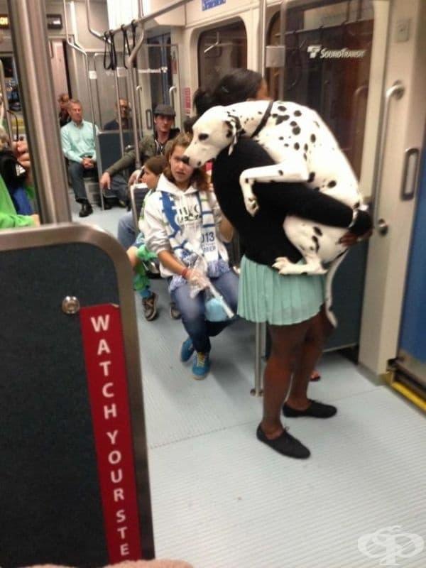 Това куче се вози в метрото за първи път.