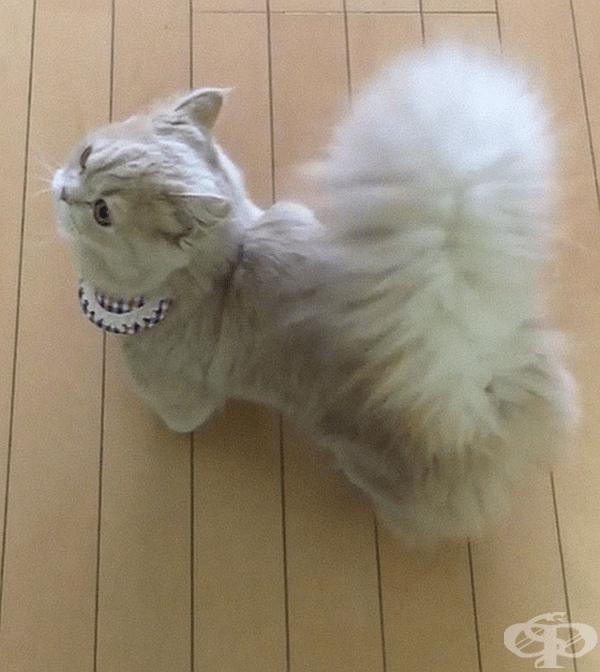 Собственикът на Бел, по-известен като ricorico_rico, споделя, че профилът на котката в Instagram има повече от 153 000 последователи.