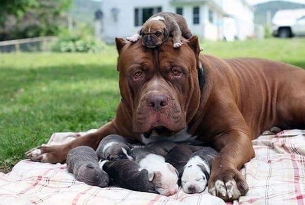 Тя ще защити всичките си деца.