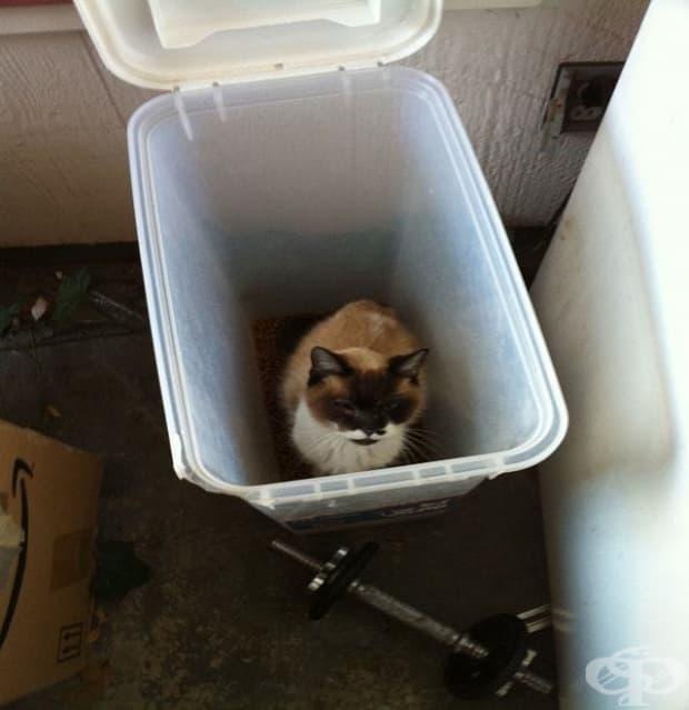 """""""Отидох да нахраня котката и ето какво намерих… това не е моята котка."""""""