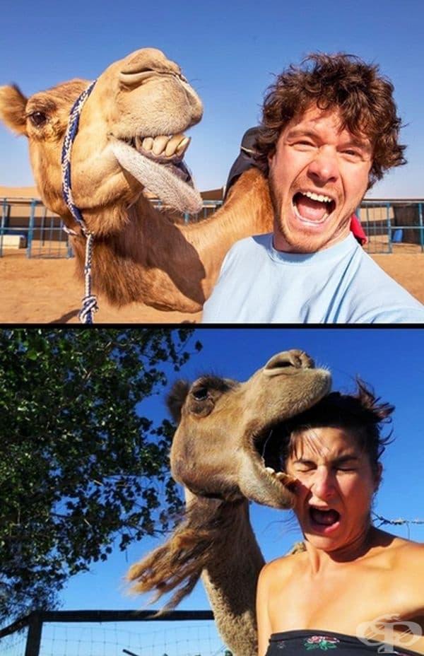 Още непредсказуеми животни в снимките!