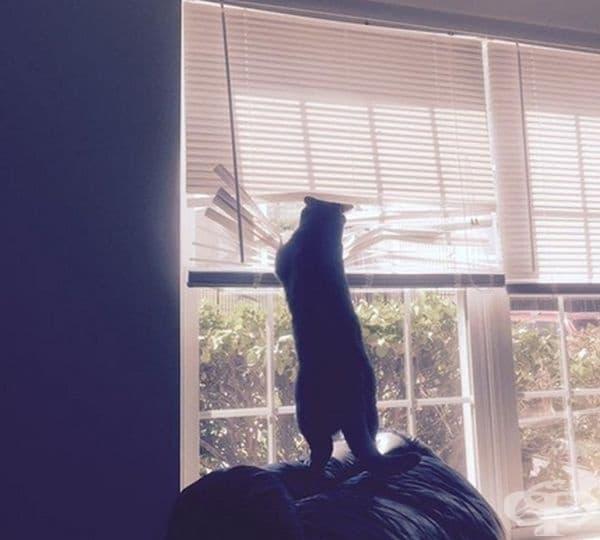 Котка с огромно любопитство.