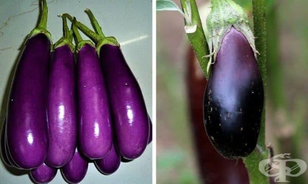 Патладжанът не е зеленчук, а плод. Докато в кухнята патладжанът се третира като зеленчук, защото не го ядем суров заради неговата горчивина, учените го класифицират като плод, тъй като вътре има семена.