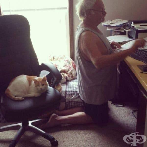 Този очарователен деспот дори не позволява на собственика си да използва стола.