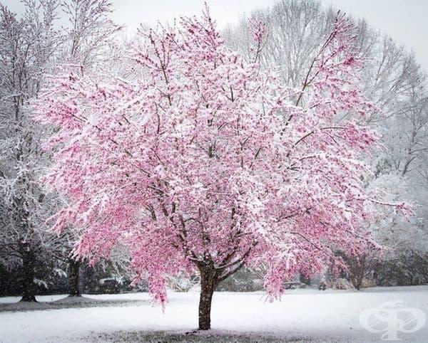 Първият сняг през пролетта, Мериленд.