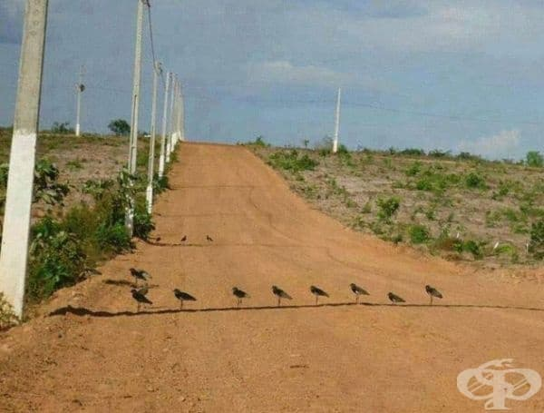 Птиците са построени в редица на сянка, за да изкарат жегата, която е +40 °C.