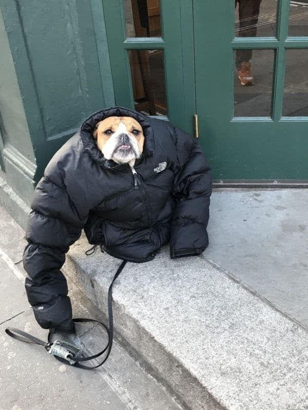 """""""Беше студено, затова дадох якето си на кучето."""""""