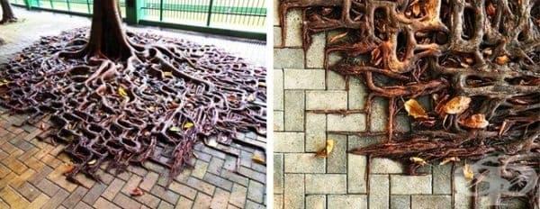 Улично изкуство, създадено от природата.