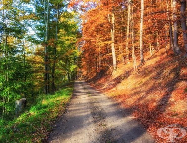 Есенна гора... зареждане на 50%.