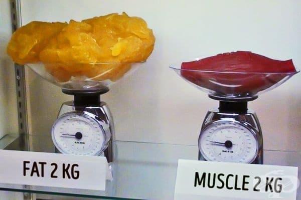 Два килограма мазнини в сравнение с два килограма мускули.