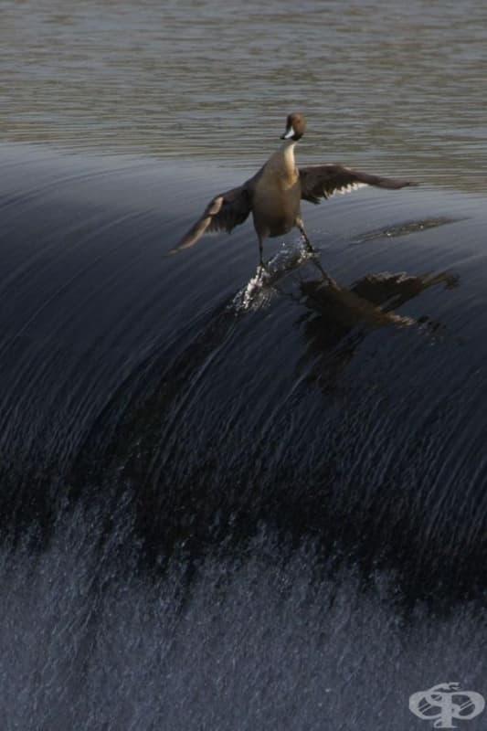 Сърфиране.