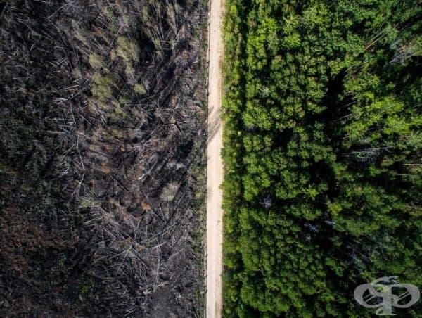 Пътят, който спира пожара.