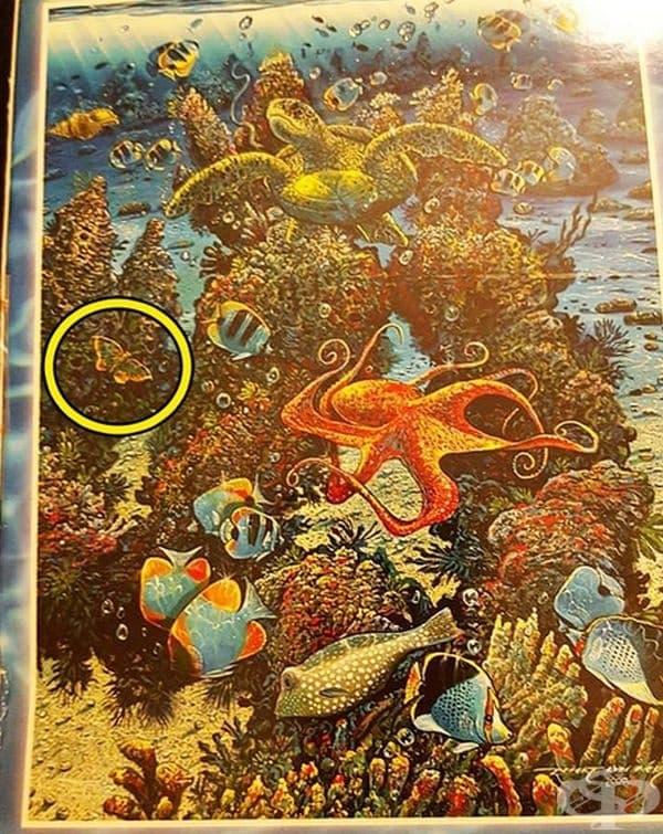 Пъзел с образ на океанско дъно. Но какво прави там тази пеперуда?