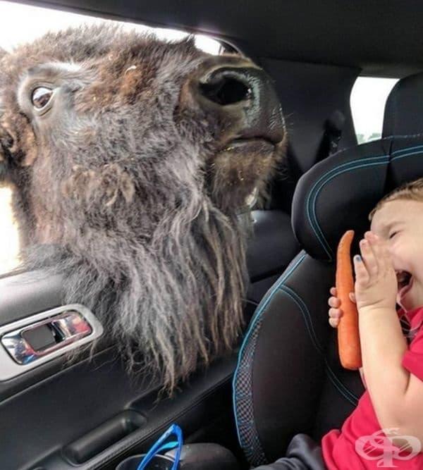 Когато се опитват да ти откраднат моркова.