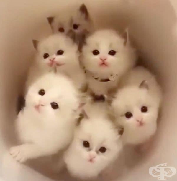 Букет от котенца.