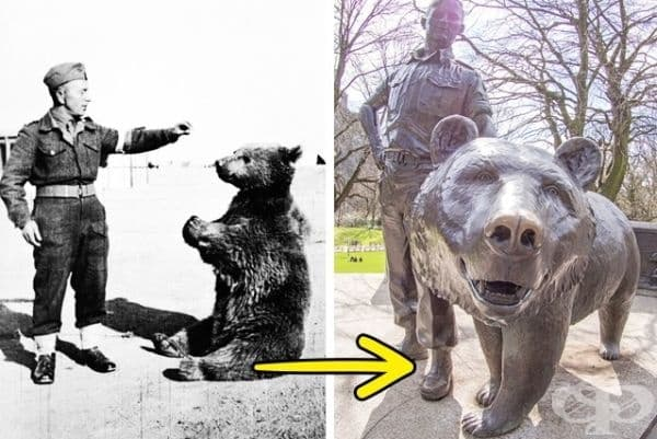 Мечока-войник Войтек. През 1943 г. по време на войната полски войници откриват в Иран малко мече, кръстели го Войтек (усмихнат войн). В битката за Монте Касино то носело куфарче с боеприпаси. В негова чест е издигнат паметник в Единбург.