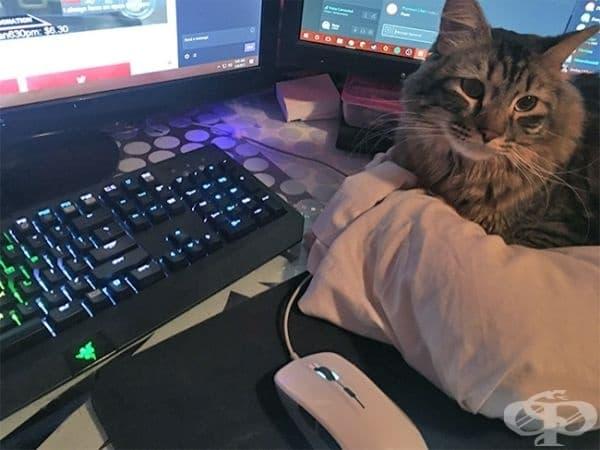 Трябваше да поставя възглавница на масата, за да може котката ми да не лежи върху клавиатурата.