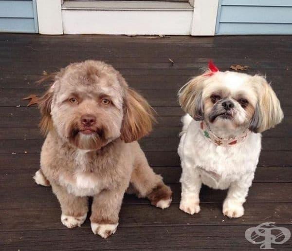 Възможно е Валкирия някой ден да се срещне с Йоги - кучето с човешко лице.