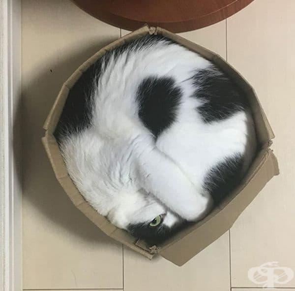 Обикновена кръгла котка.