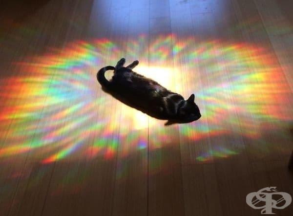 В центъра - под светлините на прожекторите.