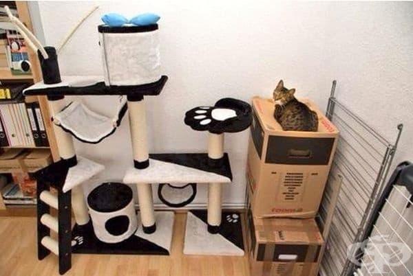 Защо са ви нови мебели за котки, когато имате кашони вкъщи?