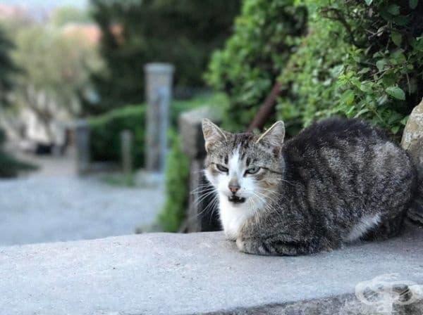 Тази котка знае как да запази спокойствие.