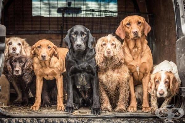 """Победител в категорията """"Кучета по време на работа"""". Фотограф: Трейси Кид."""