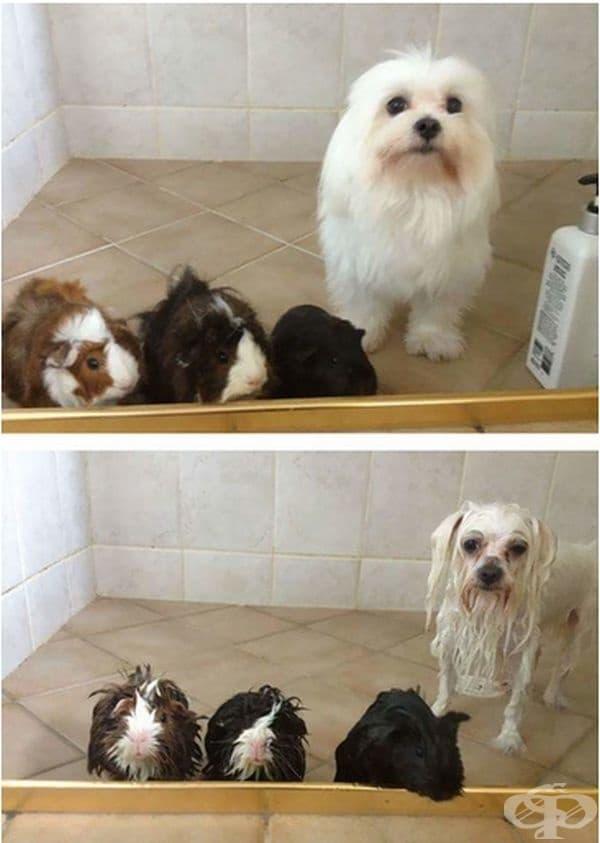 Ден за баня.