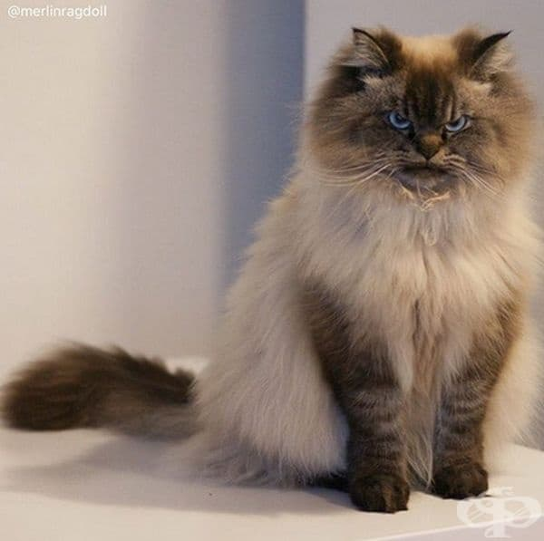 Тази котка е толкова недоволна!