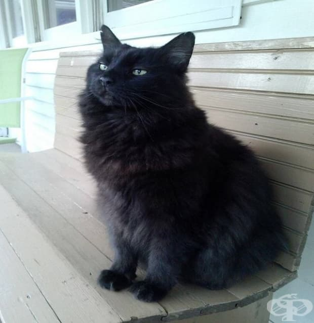 """""""Нямам котка. За щастие моят квартал предлага доставка на котки."""""""