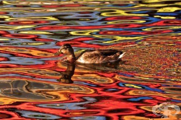 Цветовете на есента, отразени във водата.